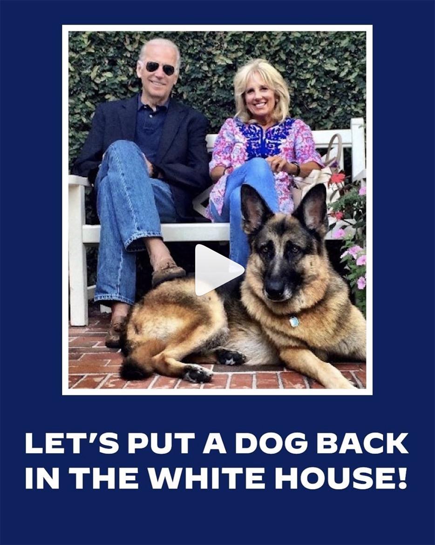 cachorro adotado cachorro joe biden ferplast presidente pastor alemão
