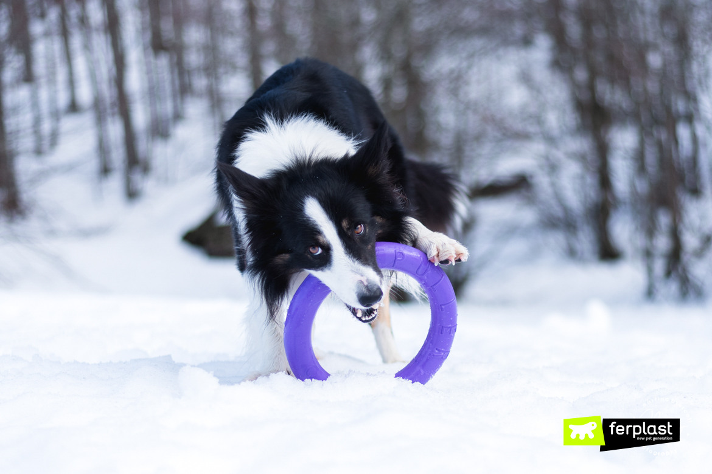 собака снег хэппи пулер ферпласт