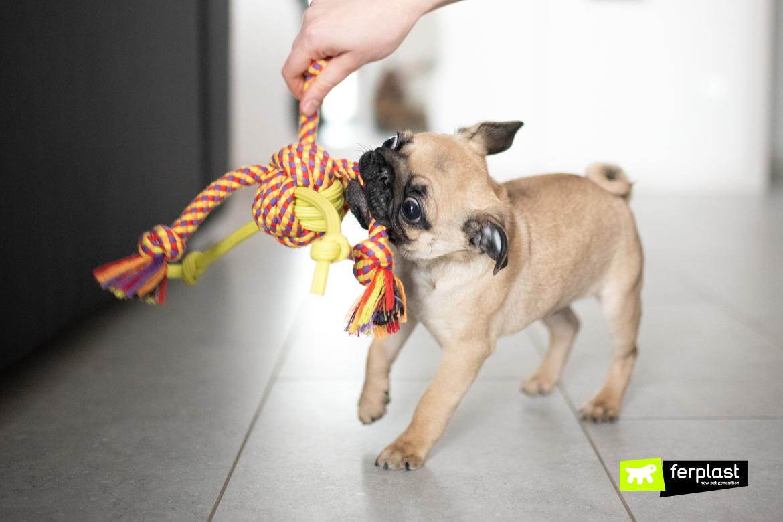 собака печаль симптомы и лекарства