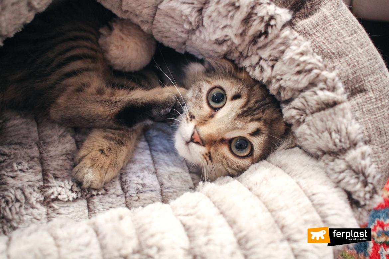 закрытый кошачий домик софт ферпласт