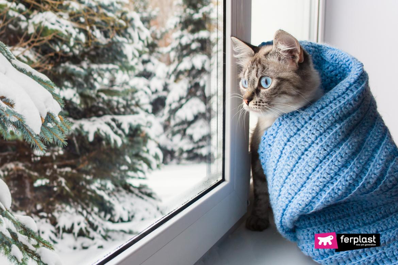 милый пушистый кот с голубыми глазами в вязаном голубом шарфе