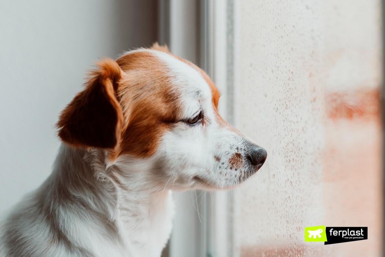 милая маленькая собака сидит у окна.