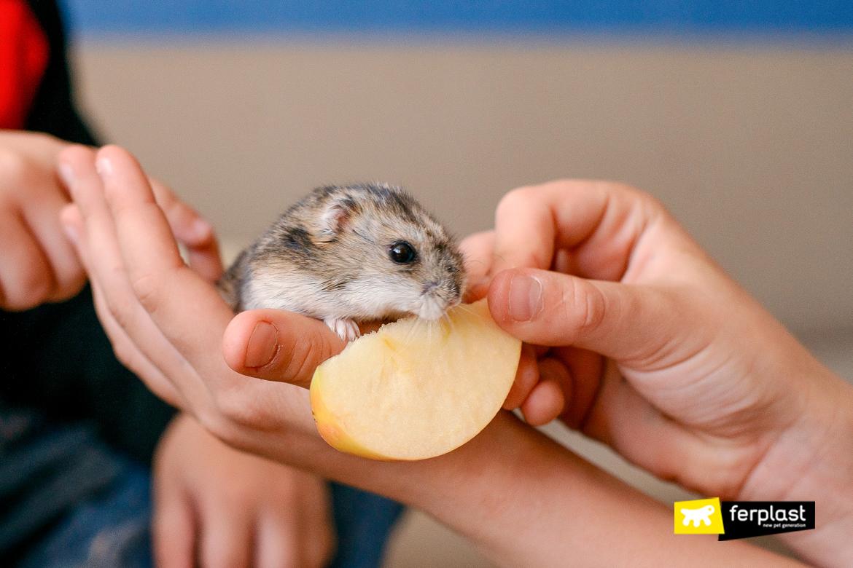 cuidados específicos para hamsters domésticos