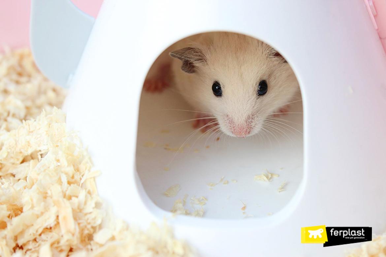 dieta de hamster sementes de vegetais nutrição adequada