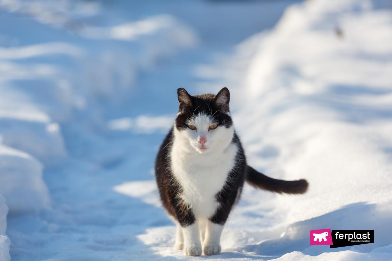 Кошка в зимний сезон