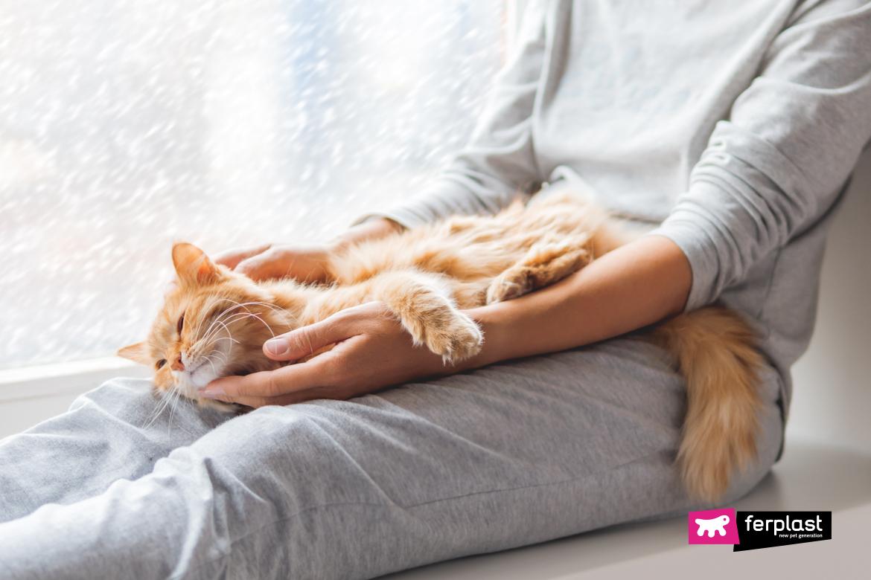 Милый рыжий кот лежит на коленях женщины