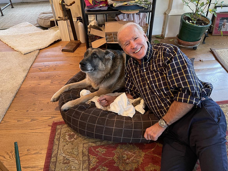 pastor alemão joe biden adotado cão adotado presidente