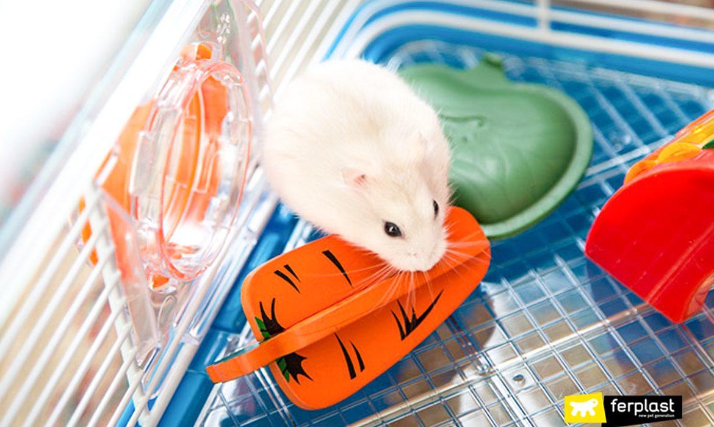 Quanto tempo vive um hamster