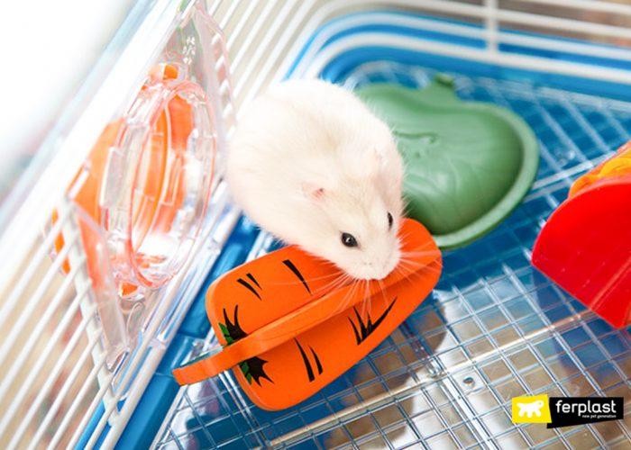 HOW LONG DOES A HAMSTER LIVE?