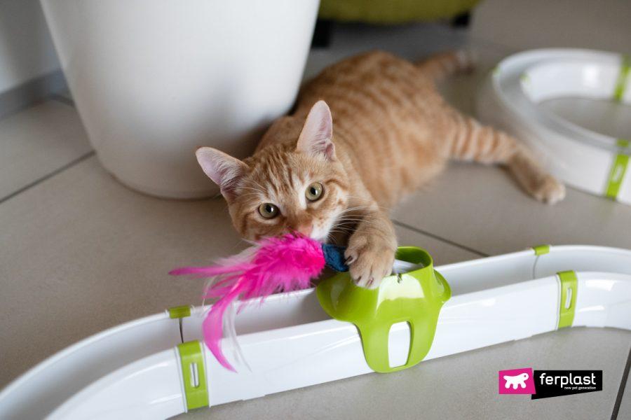 ленивые кошачьи игры