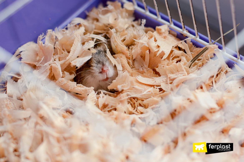 hamster maca gaiola o que usar