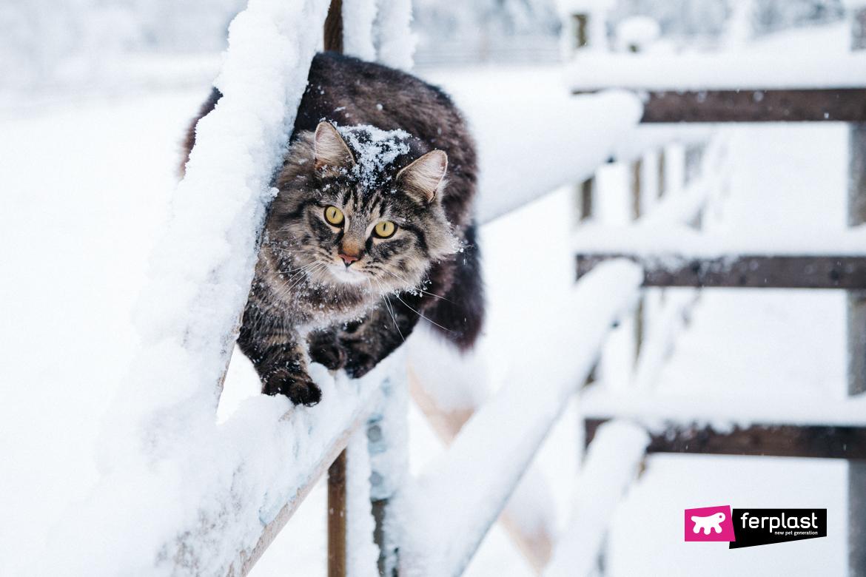 снежная опасность кошка