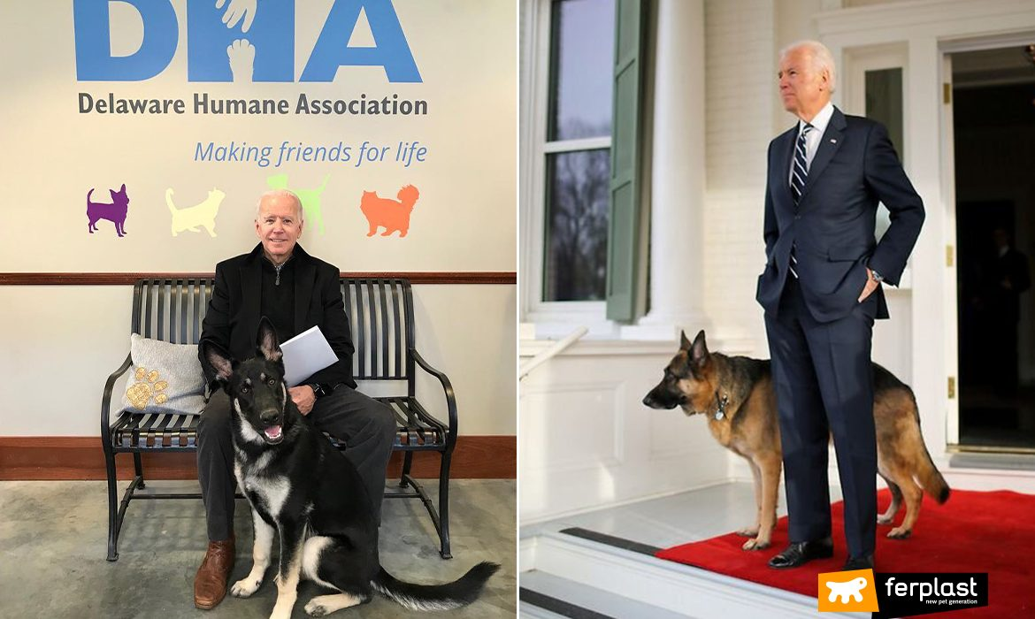 JOE BIDEN'S DOGS: AT THE WHITE HOUSE THE FIRST ADOPTED DOG