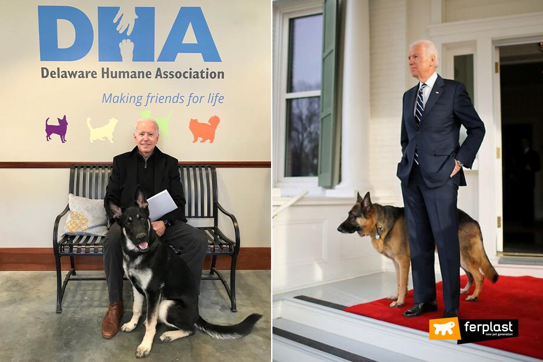 Президент США собака приемный Джо Байд