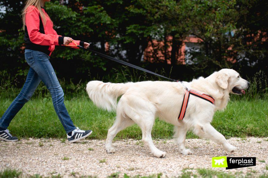 собака няня Италия профессия
