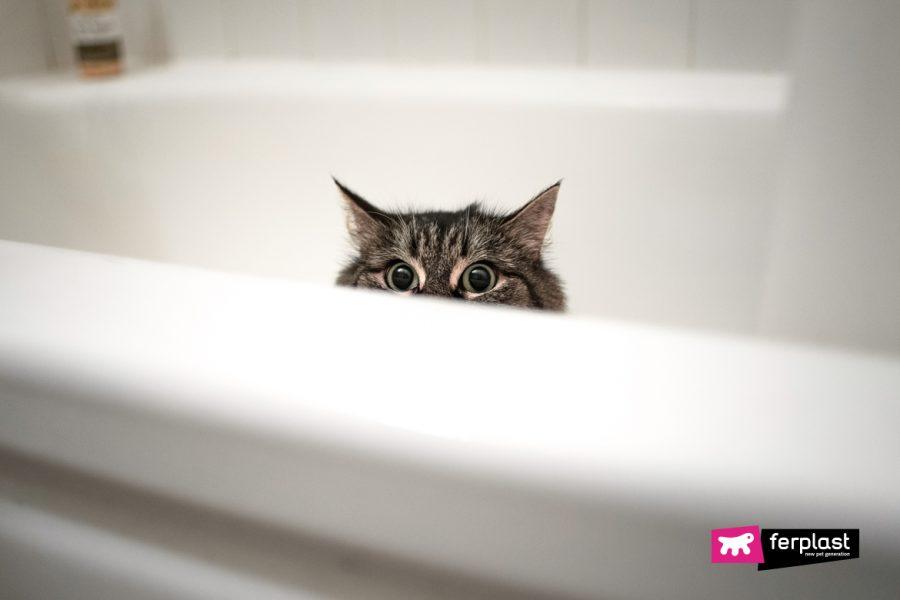 Gatto mi segue in bagno Ferplast