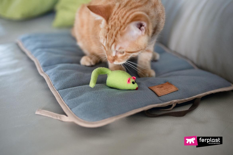кошка дверь подарки мертвые животные почему