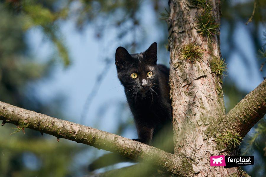 Gatto e le sue sette vite