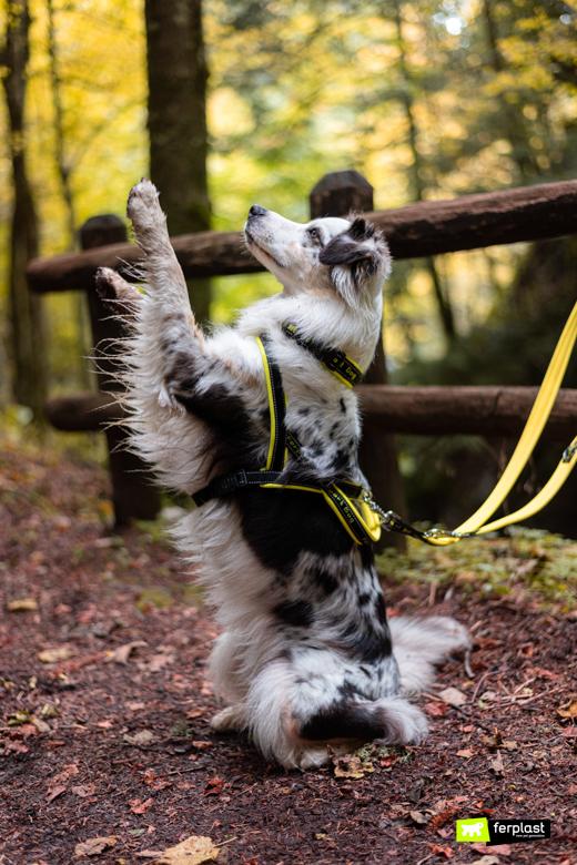 Cane con guinzaglio Nylon Ferplast Sport Dog