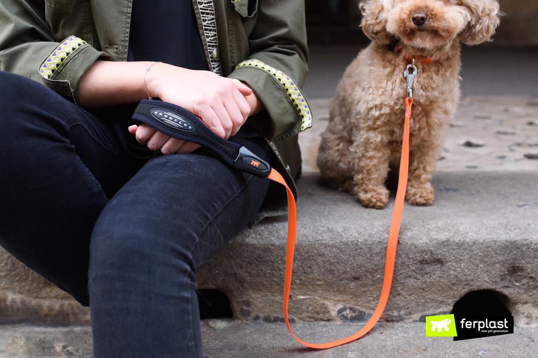 Hund-mit-gummi-leinen