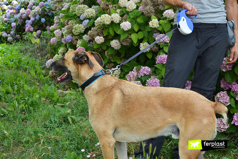 Cane con guinzaglio avvolgibile