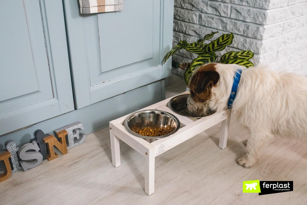 Cane mentre mangia