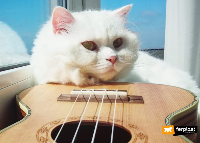 MUSICA: CANZONI DEDICATE A CANI E GATTI