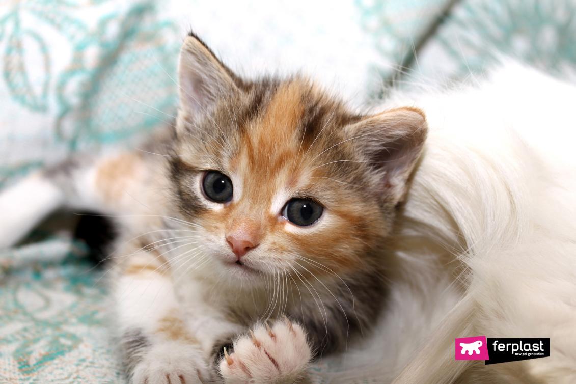 котенок-с-длинными-когтями