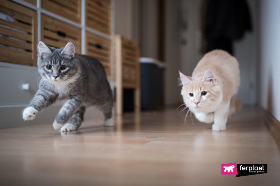 Il gatto corre per casa