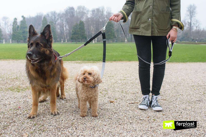 Due cani con guinzaglio doppio Elastic Twin di Ferplast