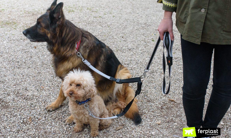 Passeando com mais de um cão ferplast
