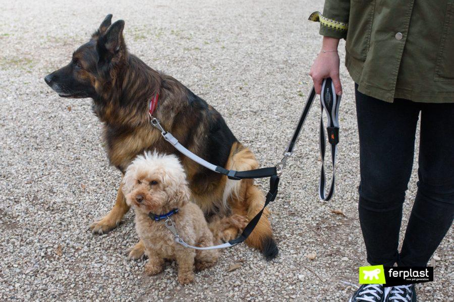 Due cani a passeggio con il guinzaglio doppio Elastic Twin di Ferplast