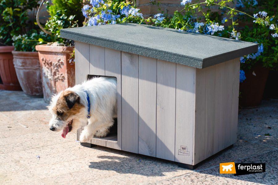 Cane che esce da casetta in legno FSC di Ferplast