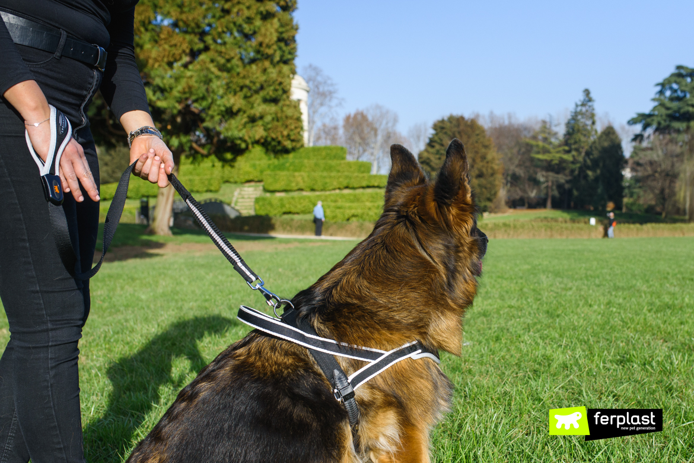 Cane a passeggio con guinzaglio singolo Ergocomfort di Ferplast