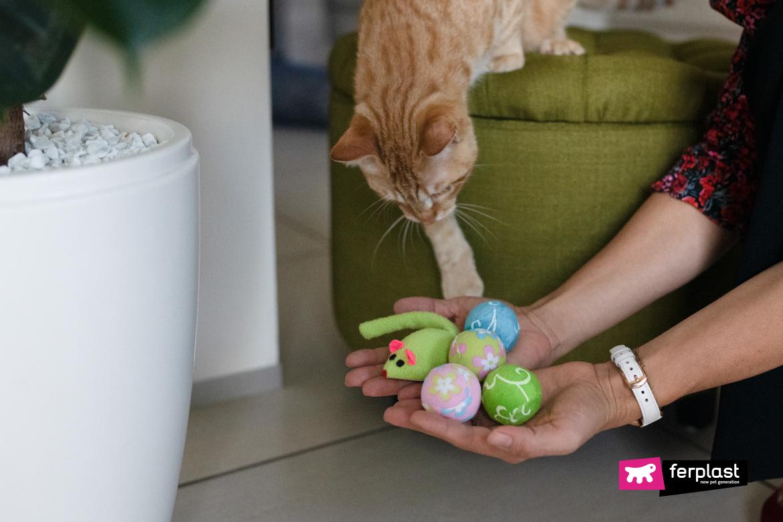 Gatto gioca con giochi Ferplast