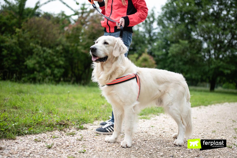 Cão e dono correm na coleira Agila Reflex da Ferplast