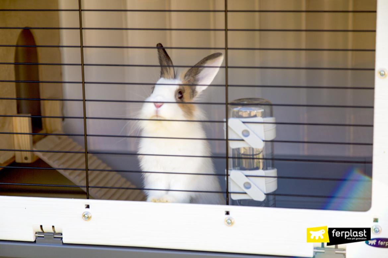 Coniglio nella gabbietta Ferplast con beverino