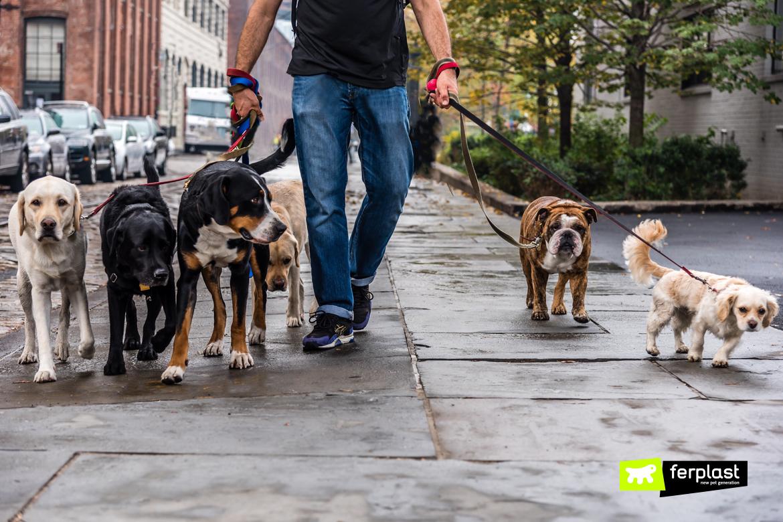 Ragazzo passeggia con più cani alla volta al guinzaglio
