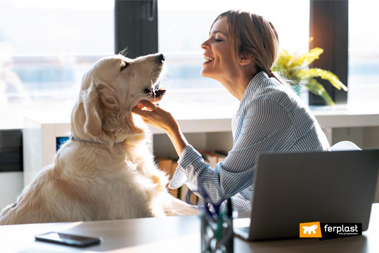 Cane in ufficio con la padrona: esempio virtuoso di animali al lavoro