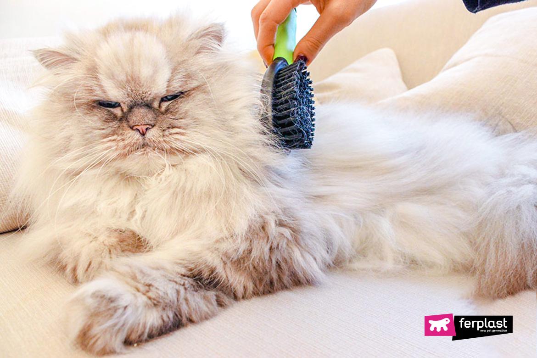 Proprietario spazzola il pelo lungo del gatto con spazzola Ferplast