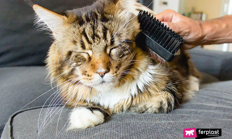 Владелец вычесывает кошачью шерсть весной