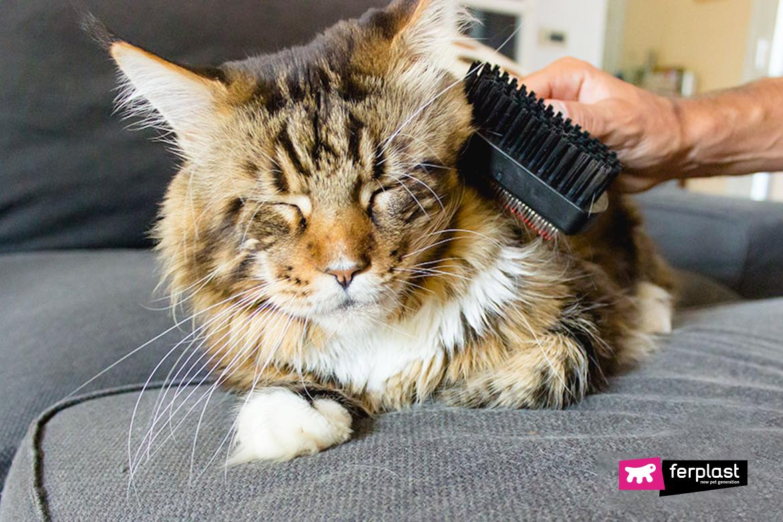 Proprietario spazzola il pelo del gatto in primavera