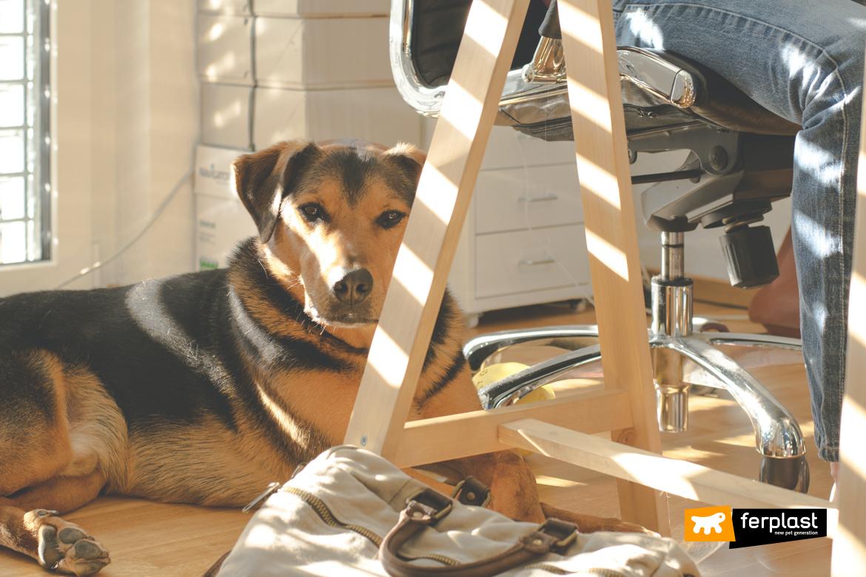 Cane disteso accanto alla scrivania del padrone in ufficio: esempio virtuoso di animali al lavoro