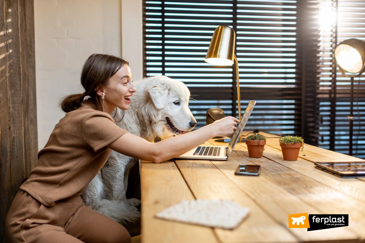 Cane al lavoro con la padrona: esempio virtuoso di animali al lavoro
