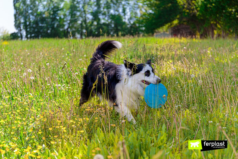 Cane gioca con frisbee di Ferplast per mantenersi in forma