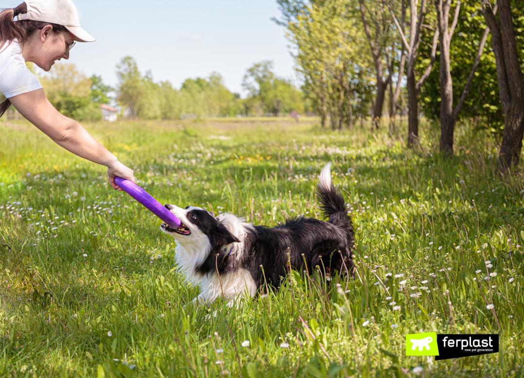 Cane gioca con il puller di Ferplast per tenersi in forma