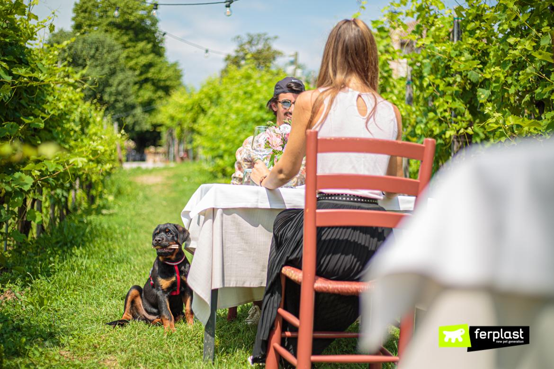 Cane in vacanza con padrone a tavola