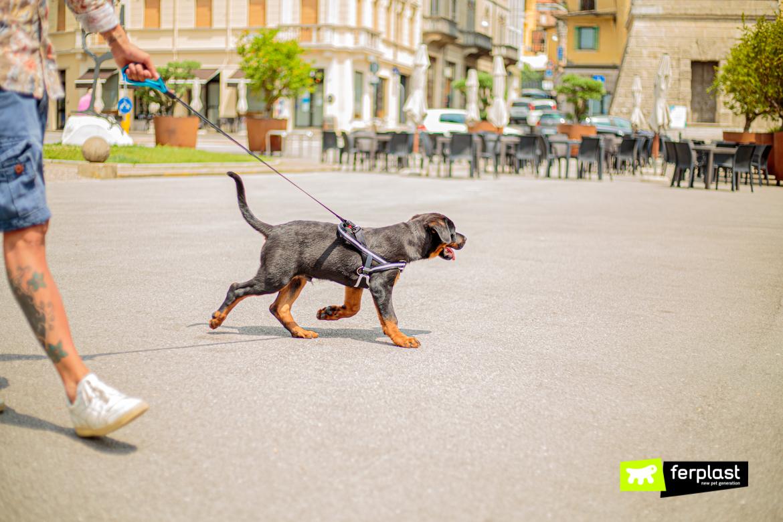 Cane in vacanza a passeggio con pettorina e guinzaglio Ferplast