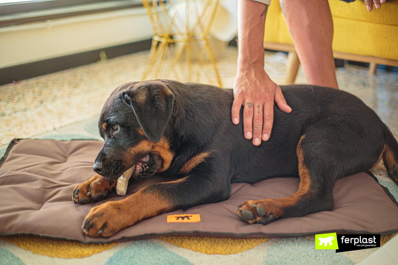 Cane in vacanza su cuscino Jolly di Ferplast