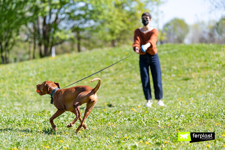 Cane a passeggio con il guinzaglio Flippy One di Ferplast per tenersi in forma